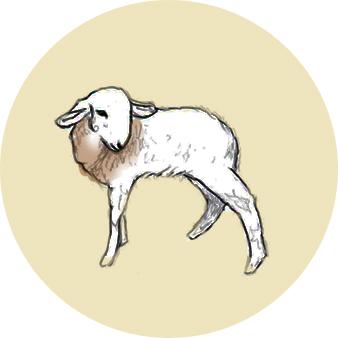 Les agneaux