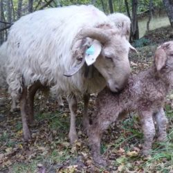 brigasque-et-agneau