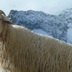 brigasque-laine-froid-neige